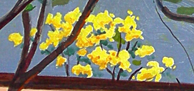 detail of yellow shower tree